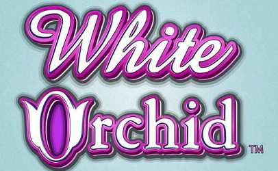 Covering the Basics of White Orchid Slot Online